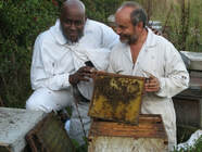 Handling Queen Bees with celebrity chef Ainsley Harriot